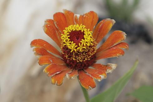 une jolie fleur qui semble avide de reproduction